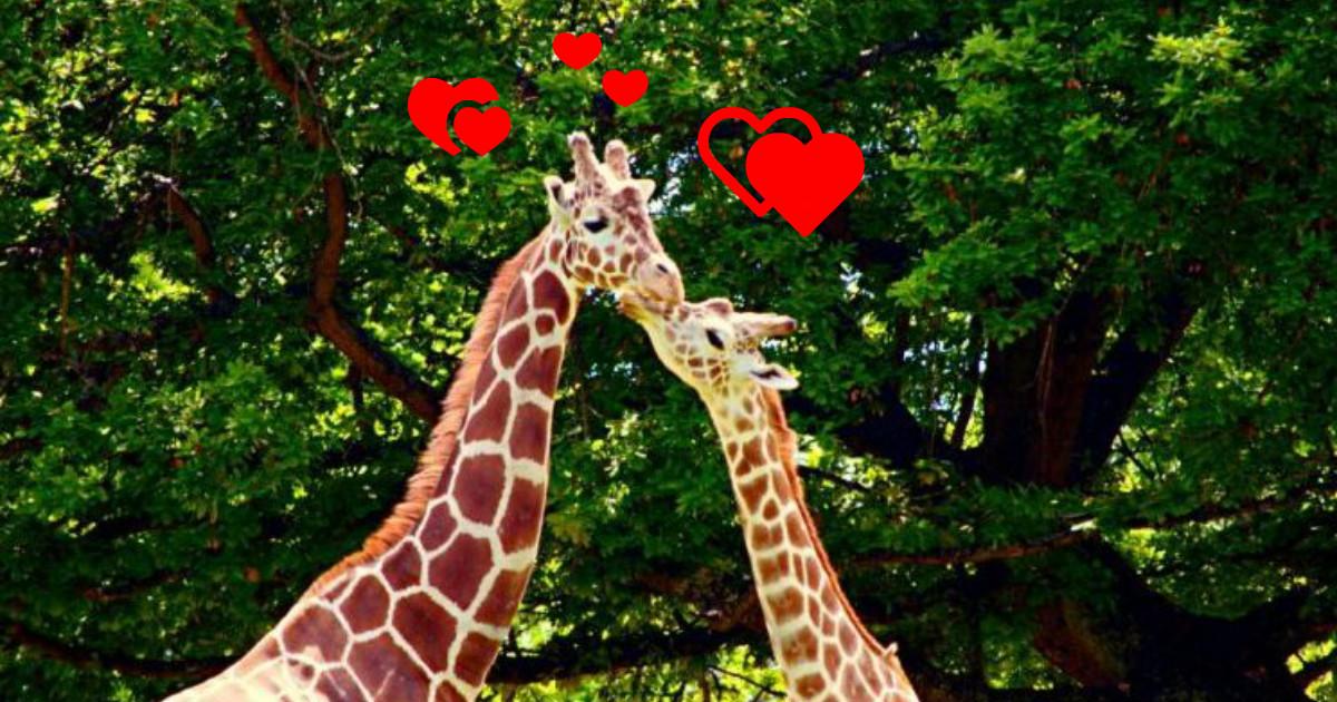 Ля мур по-звериному! 20 животных, которые точно знают, что такое любовь)