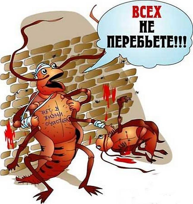 Тараканы большую часть своей жизни отдыхают. информация, картинки, факты