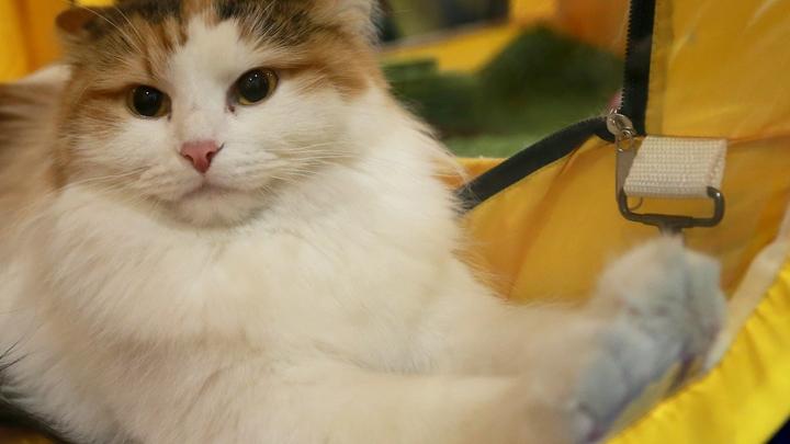 Владельцы кошек и собак более устойчивы к коронавирусным болезням, включая COVID-19, - ветеринар