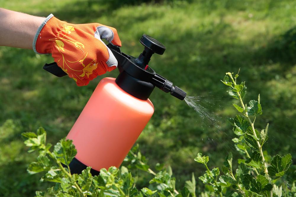 10 средств защиты растений в огороде