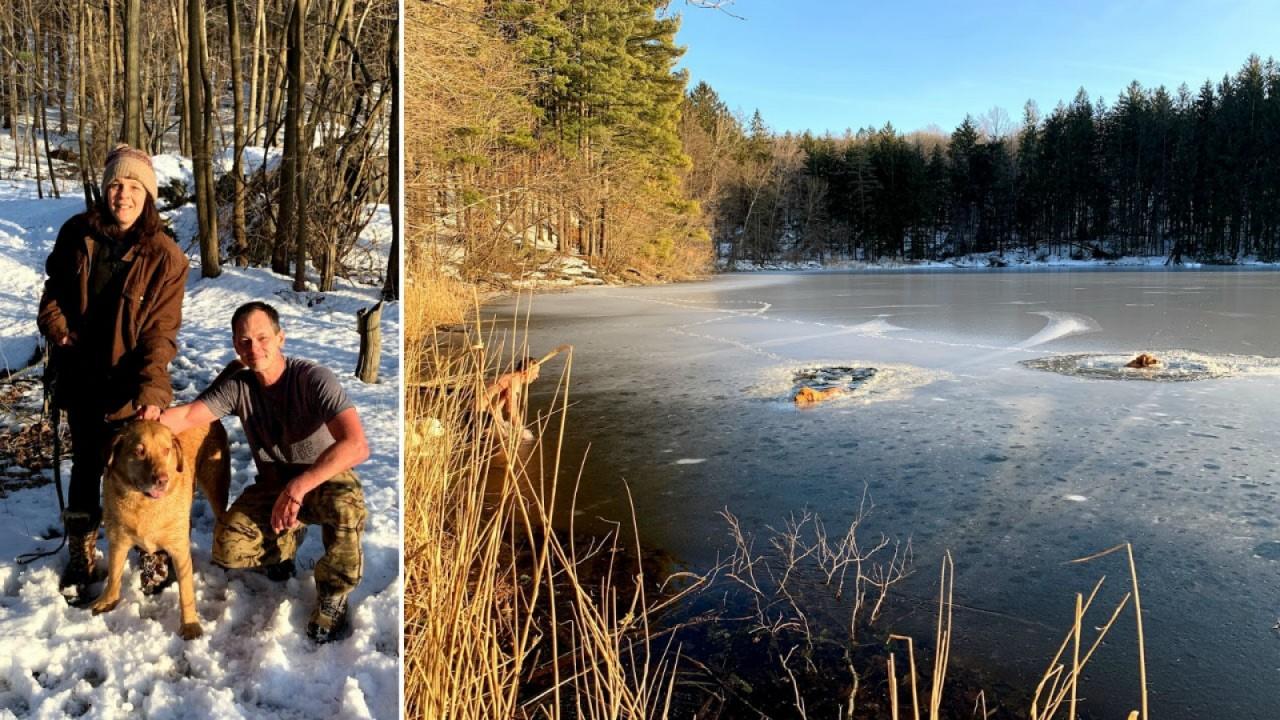 В США мужчина спас тонущих собак, пробив для них дорогу во льду голым торсом жизненное