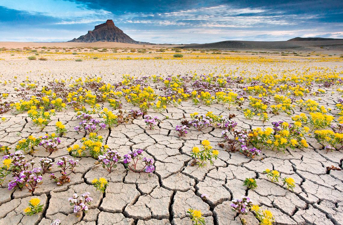 Цветущие пустыни - сказочная красота нашего мира!