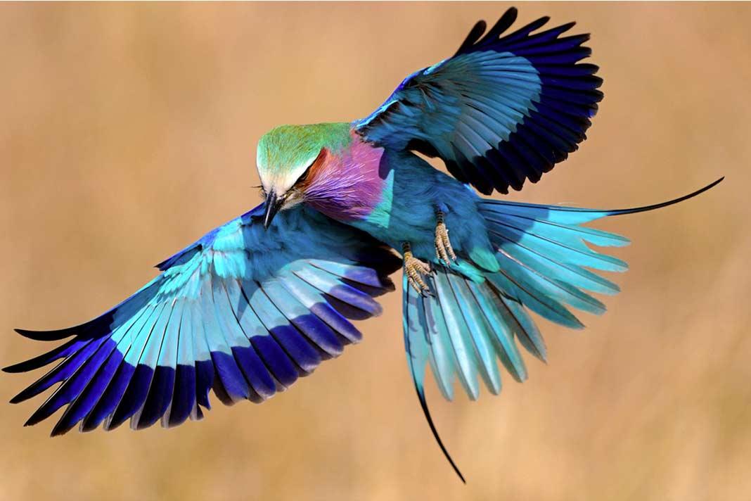 Райские птицы - мифы и интересные факты