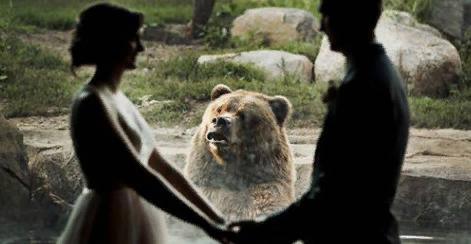 """""""Объявляю вас обедом и ужином"""":в Сети обсудили реакцию медведя на свадебную фотосессию в зоопарке"""