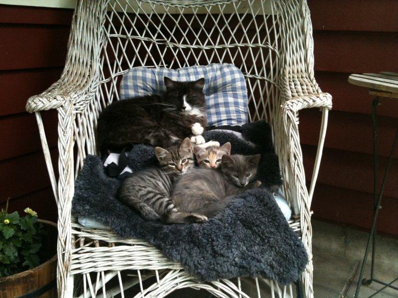 8. За 7 лет одна пара кошек и их потомки способны произвести 420 тысяч котят.  Именно поэтому зоозащитники стараются стерилизовать и кастрировать как можно больше найденных бездомных котеек. кот, кошка, факты