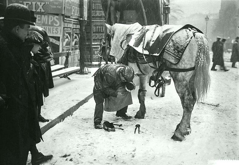 Лошадь в снегу (1908 г.). Ремонт ходовой)))) Весь Мир в объективе, ретро, старые фото