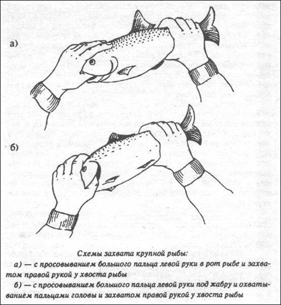 Как ловить рыбу руками