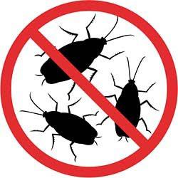 Как выгнать тараканов навсегда. Супер способ