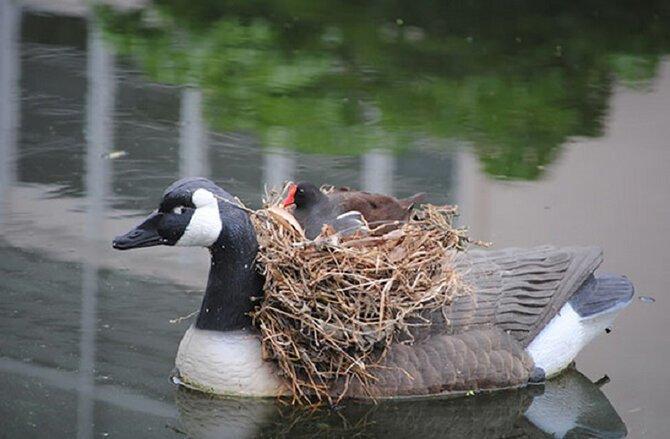 30 гнезд в страннейших местах гнёзда, животные, птицы, факты