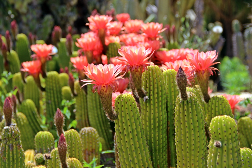 Парк камней и кактусов. Израиль, Рамат-Ган