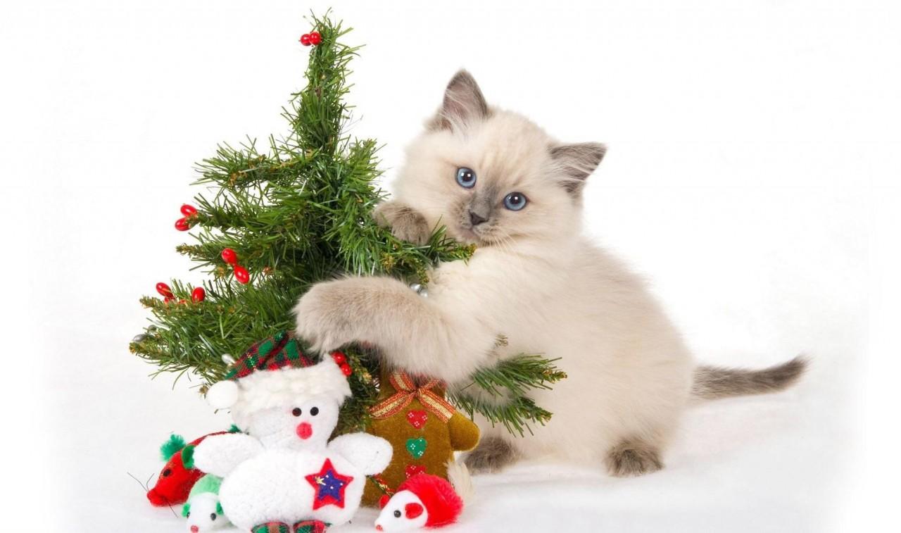 Кошки поздравление с новым годом
