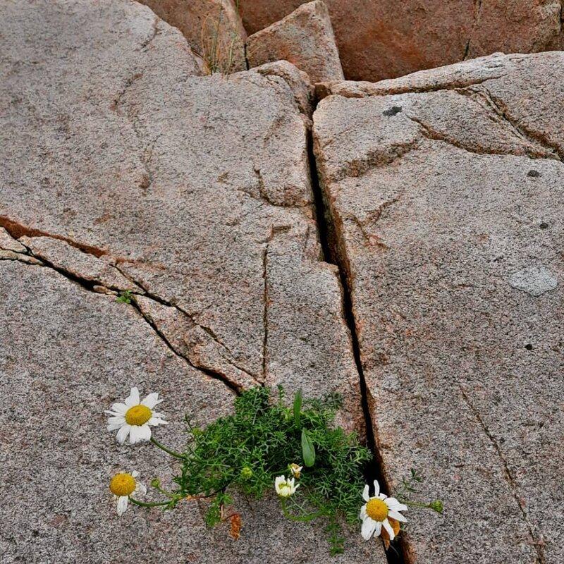 Мощь жизни катаклизмы, природа, растительность