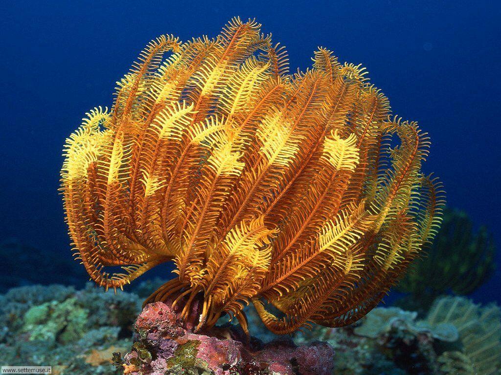 Растения подводного мира фото и названия
