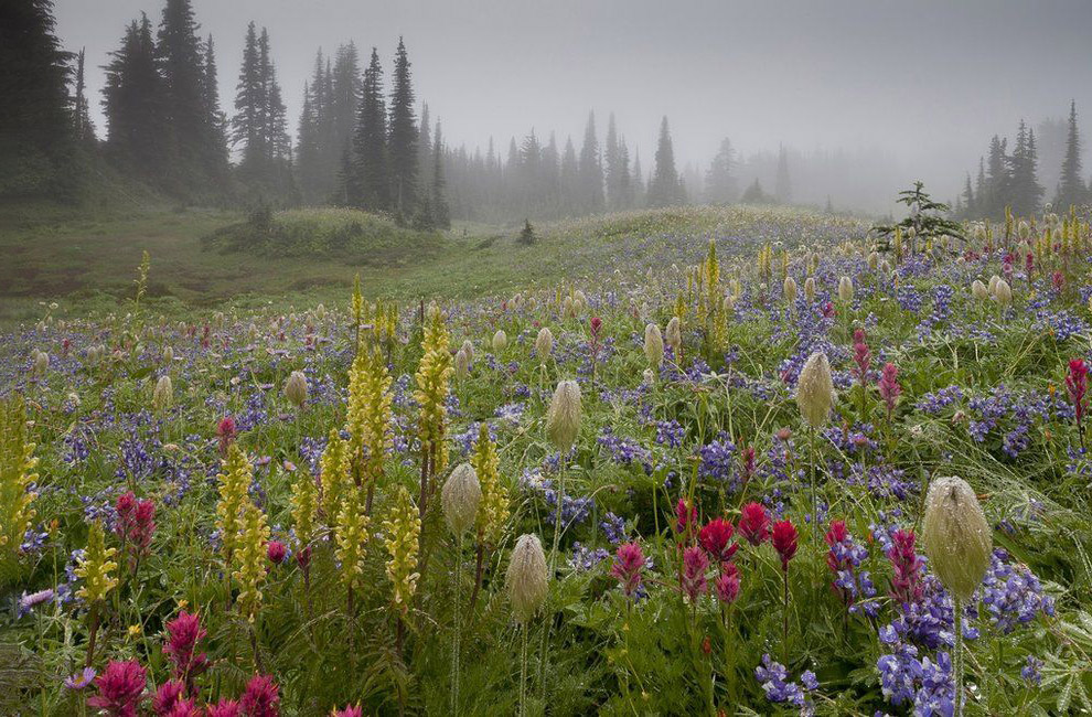 Лучший садово-парковый фотограф 2019 фотография