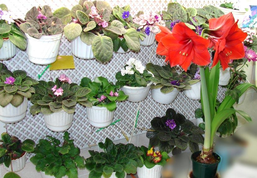 Интересная подкормка для домашних цветов