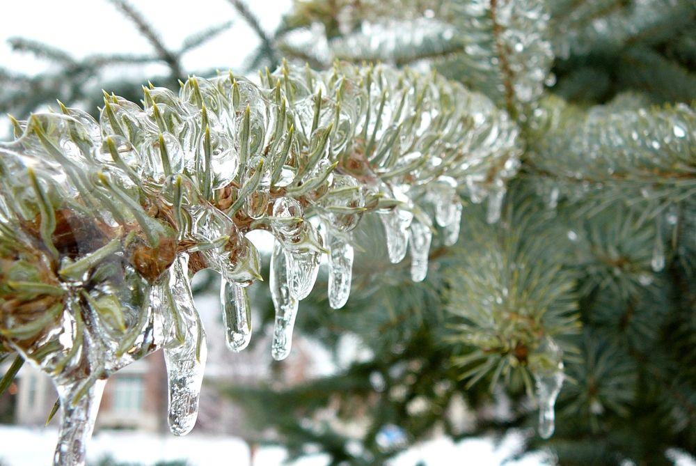 Какой мороз выдерживает клубника