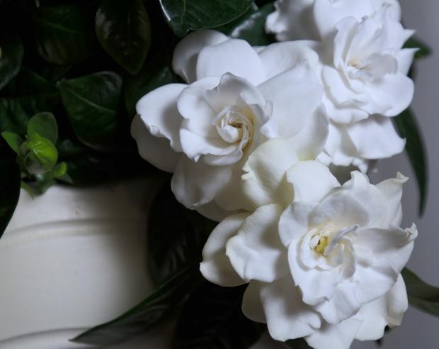 8 капризных и очень красивых комнатных растений за которыми нужен особый уход комнатные растения,цветоводство