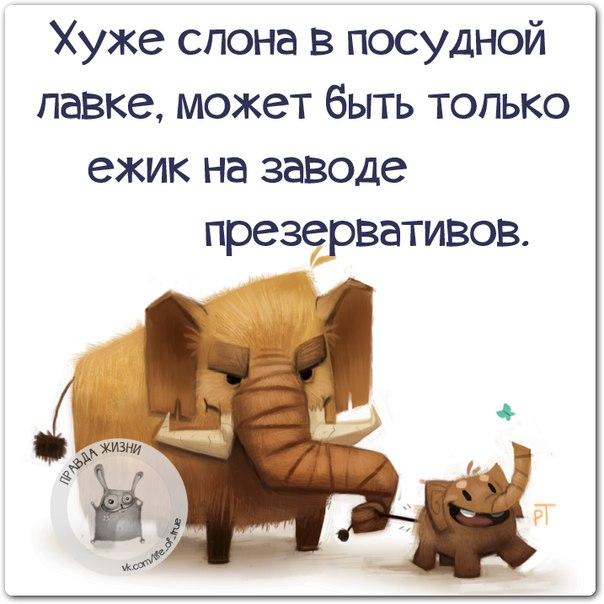 1426189697_frazki-12 (604x604, 195Kb)