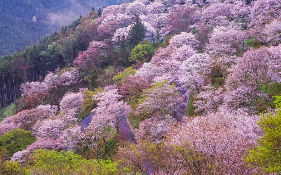 разговор вишневые горы картинки которых есть аквариум