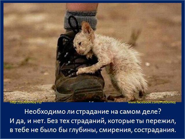 Необходимо ли страдание на самом деле?...