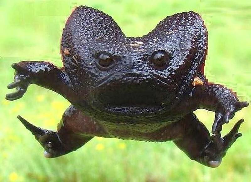 Странные животные нашей планеты