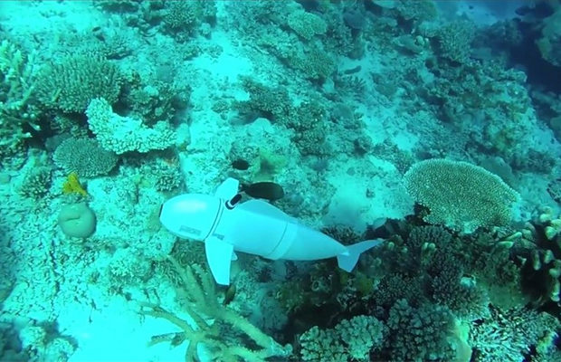 рыба-робот_1