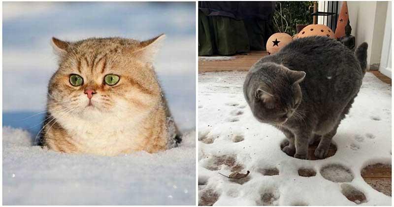 Вот так реагируют кошки, которые впервые увидели снег: 19 уморительных фото