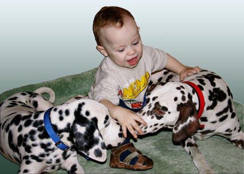 Как выбрать собаку или кошку для своего ребенка