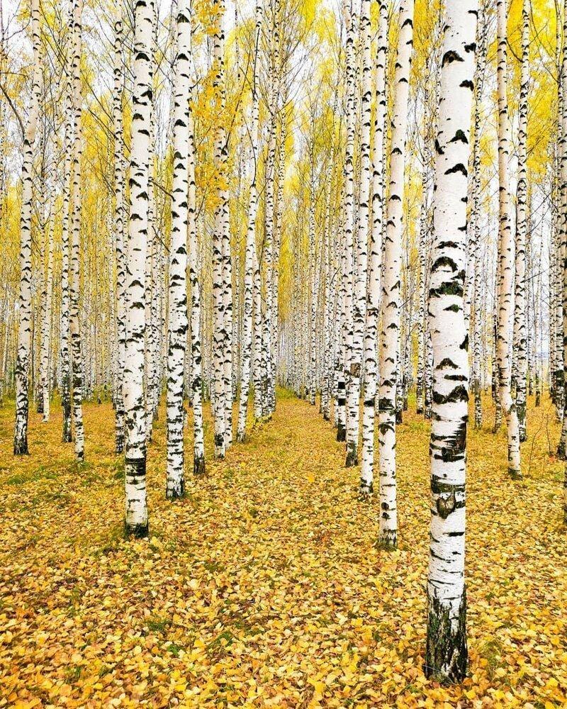 2. А рядом прекрасный лес бабушка, глубинка, деревня, детство, русская деревня, фото
