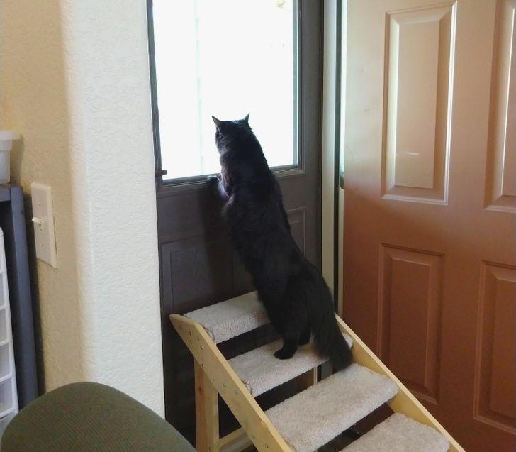 15 наглых кошачьих морд, которые хотели показать, кто в доме главный. Но хозяева оказались хитрее домашние животные,наши любимцы