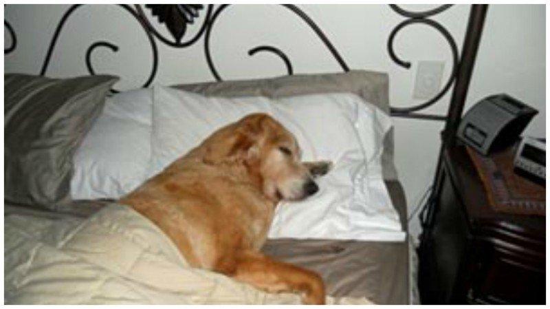 6. Собака - везде Любовь, животные, ревность, собака