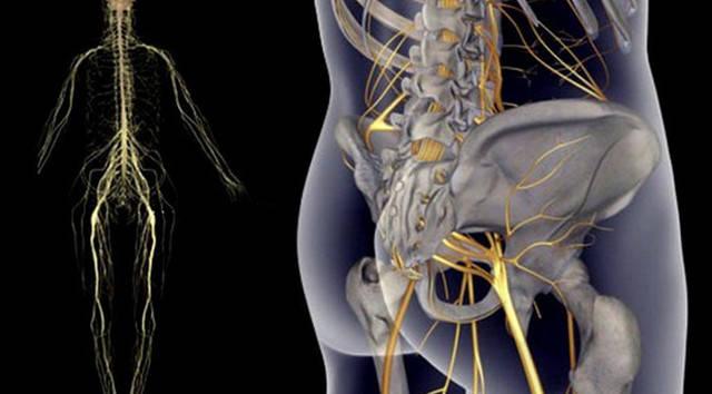 защемление седалищного нерва (640x354, 110Kb)