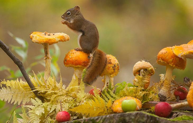 картинки про осень и животных механизмы смете, что