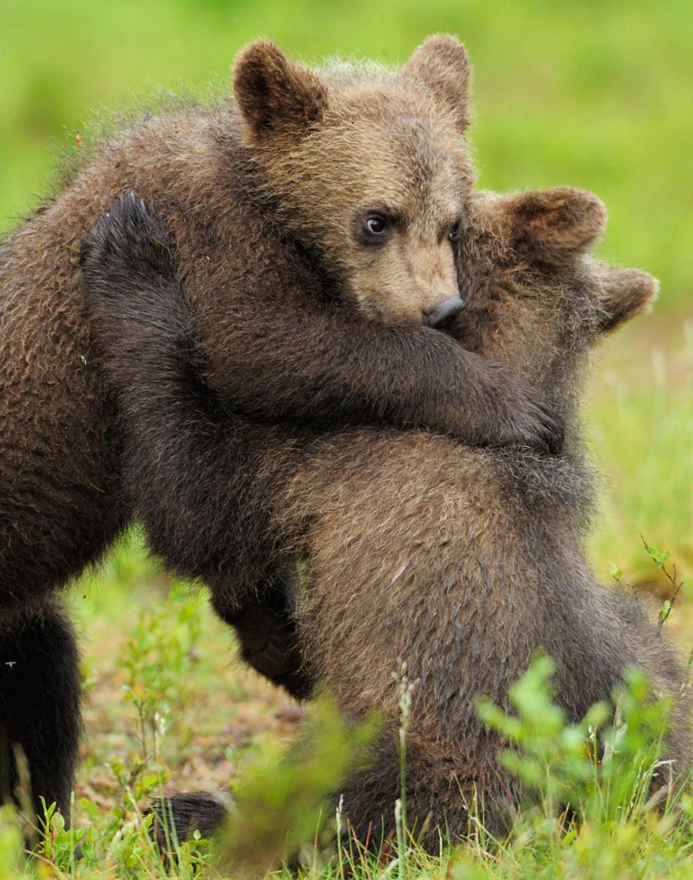Юбилеем, картинки медвежата