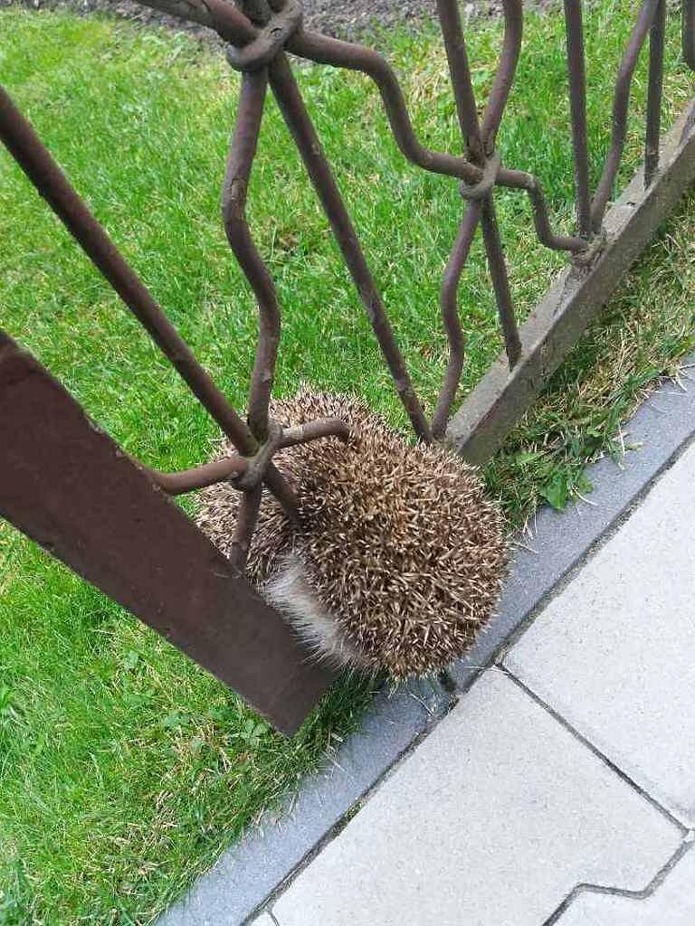 Застрявшая в заборе. Необычная и трогательная история