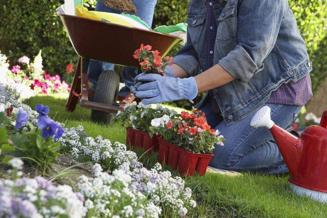 Картинка посадки цветов