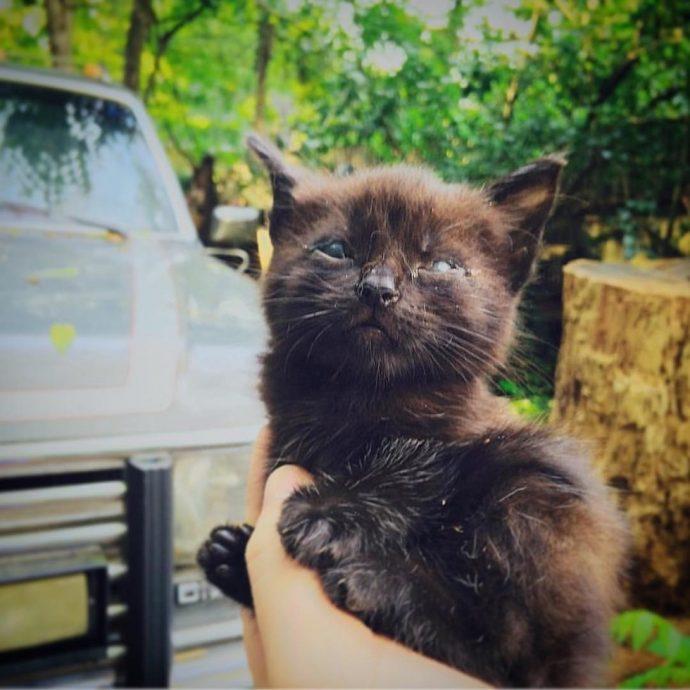 Котёнок не мог моргать, видеть, любить… Он был брошен умирать в лесу – но стал любимчиком судьбы