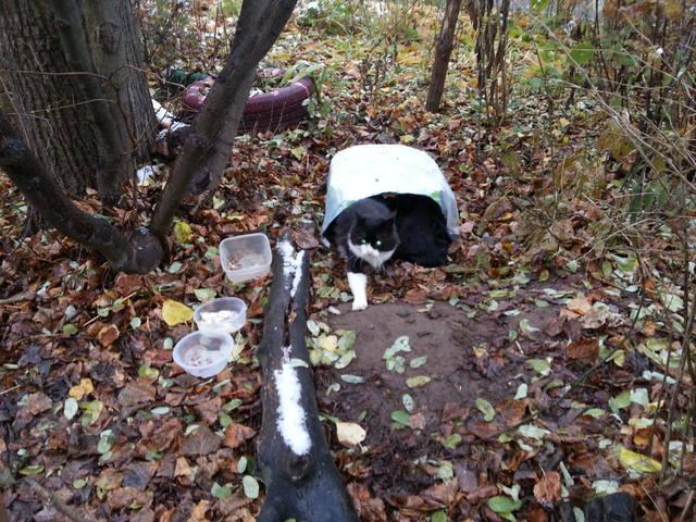 «Никто не заметил проблемы!» Мужчина подобрал кота, отдал ему свою комнату, но жизнь бедолаги висела на ниточке