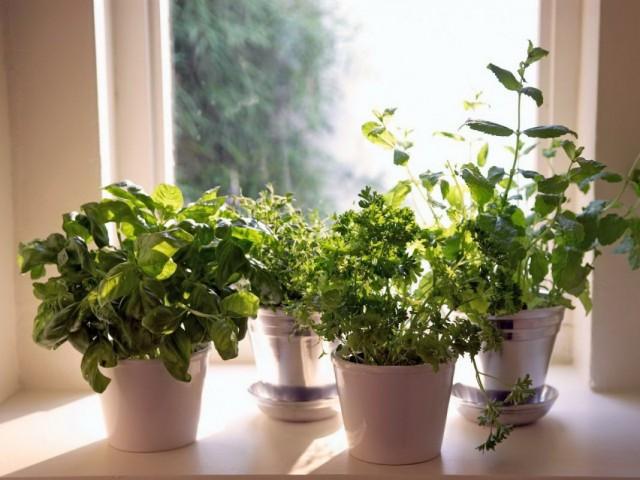 Витаминный конвейер. Какую зелень можно перенести с огорода в дом осенью?