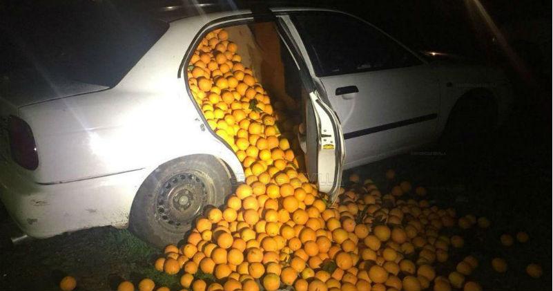 В Испании арестовали семью, укравшую четыре тонны апельсинов