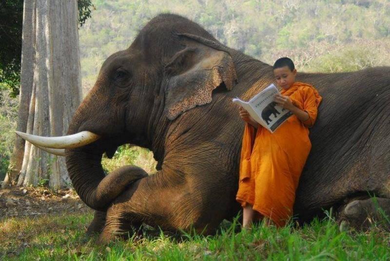 Меня прикол, картинки с прикольными слониками