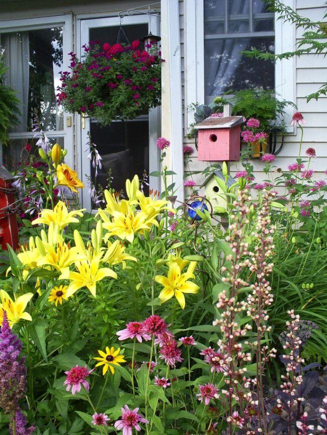 Цветы на дачи в картинках с названиями