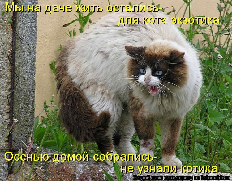 На дачах водятся коты небывалой красоты! Дачная котоматрица!