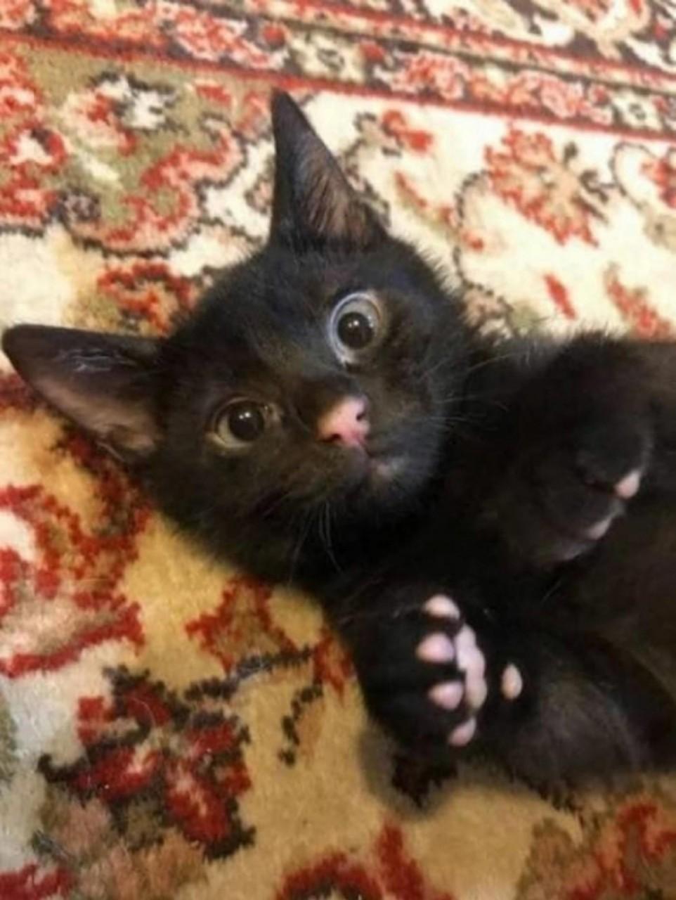 Картинки по запроÑу черный кот Ñ Ñ€Ð¾Ð·Ð¾Ð²Ñ‹Ð¼ ноÑом