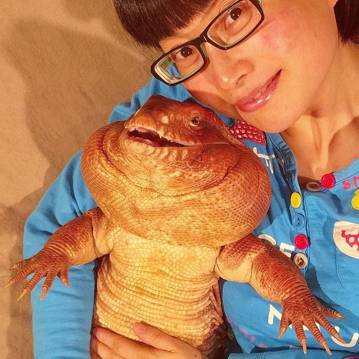 Эта очаровательная ящерица стала звездой интернета