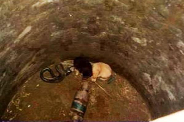 В ЭТО сложно поверить! История двух очаровательных щенков, которые в отсутствии матери упали в глубокую яму с Коброй!