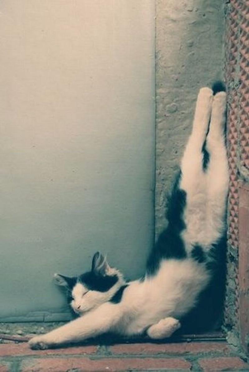 спать у стенки картинки подойдут трапеции