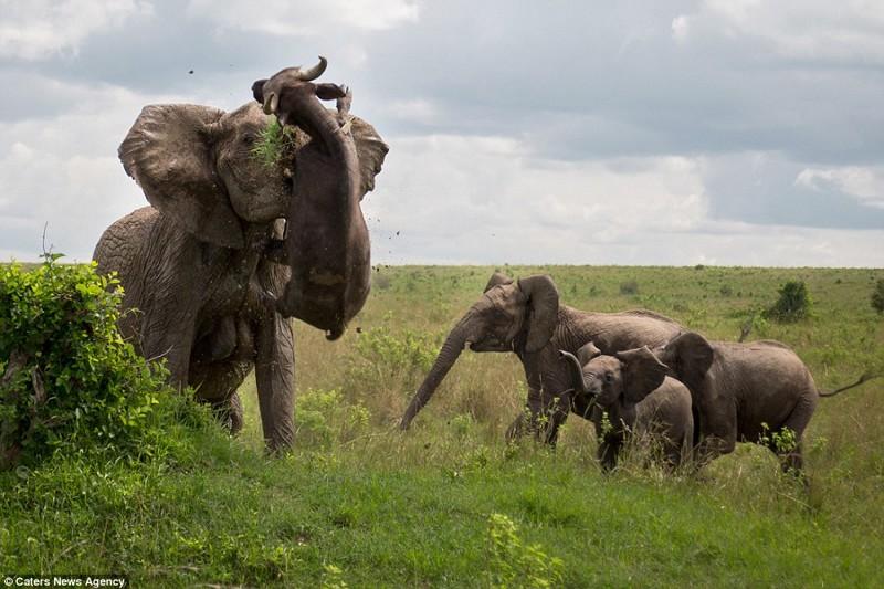 3. Со слонами лучше вообще не связываться животные, природа, ужас