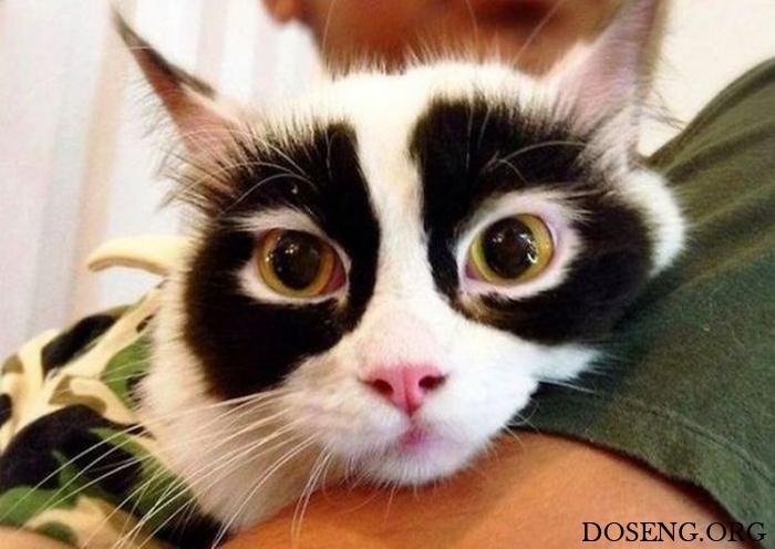 Коты необычного окраса
