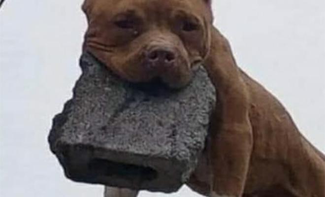 Мужчина научил свою собаку скидывать сверху камни на нежелательных гостей Культура